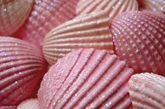 Love how delicate and girly the shells look! Glitter and pink! Pretty In Pink, Pink Love, Pale Pink, Perfect Pink, Tout Rose, Monster Prom, Pink Summer, Pink Beach, Summer Beach