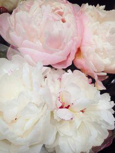 Peonies Beautiful Roses, Pretty Flowers, Wild Flowers, Peony Painting, Romantic Cottage, Wedding Flower Decorations, Flower Fashion, Flower Power, Peonies