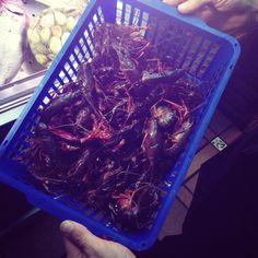 """Cangrejitos de río! el """"chupeteo"""" del verano...  www.restaurantecasalucio.com"""