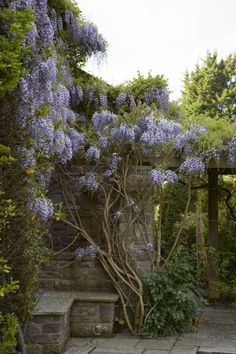 An informative article on how to make wisteria bloom and on how & when to prune it. More sites are given for more info.
