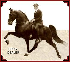 the Drug Dealer : sire of The Pusher CG. The Drug Dealer is by Sun's Gunsmoke out of Knight Lady. Sun's Gunsmoke: Midnight Sun/Elrod's Princess Alen.