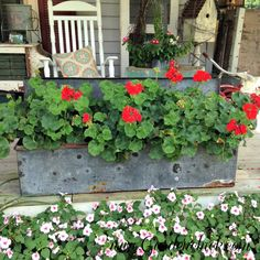 Love these geraniums in Galvanized Container - AND all the other different containers for flowers used in this garden post. Inspiring!