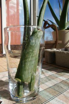 Cómo hacer Gel de Aloe Vera en casa.