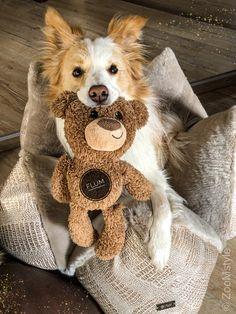 Animals Beautiful, Cute Animals, Fluffy Puppies, Friends Forever, Animal Kingdom, Cute Dogs, Corgi, Camilla, Babies