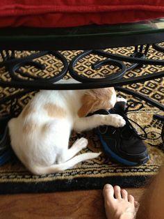 ¿Tu perro duerme en cualquier lugar? Mira estos... - Taringa!