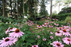 Bostuin, Landelijke tuin, Tuinarchitectuur, Beplanting, Prairie beplanting, Villatuin, stapstenen, gras, bos, bomen, tuinen