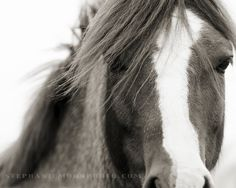 Horse Photography, black and white horse photography, fine art equine photography, 8x10. $25.00, via Etsy.