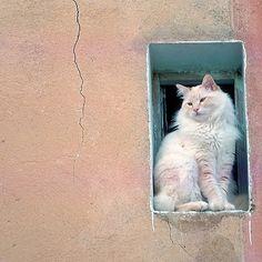 Beautiful kitty at HIS window... ^..^