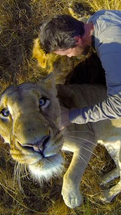 Are lions the new endangered species? Meet the lion whisperer