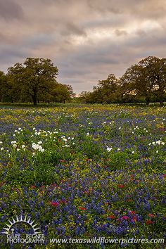 Prairie Wildflowers - Texas Wildflowers by Gary Regner