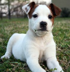 smart looking puppy dog