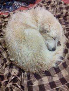 Después del baño, a dormir!!!!