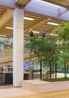 bureau bois/végétation