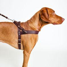Cloud 7 Dog Harness & Leash CENTRAL PARK