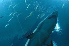 Seaquarium Seaquarium Whale, Animals, Whales, Animales, Animaux, Animal, Animais