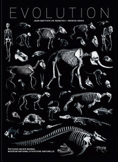 Evolution: The Natural History of Animal Skeletons, Stripped Down | Brain Pickings
