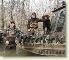 This Labbie is living the dream hunting up a bunch of drake Mallards!