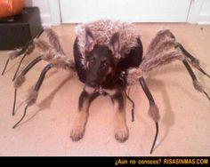 Disfraces perrunos: Araña