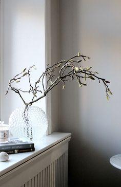 Magnolia. Foto: Johanna Bradford