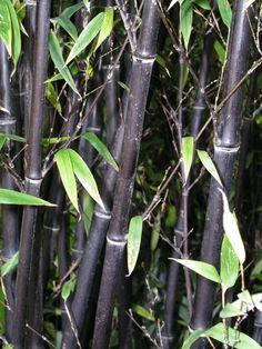 Die 36 Besten Bilder Von Bambus Gardens Garden Und Nursing Care