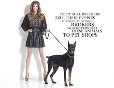 Models Against Pet Shops and Puppy Mills.   What do you get when you combine glamorous professional models with cute rescue dogs, including a puppy mill survivor? The feel-good grass-roots (socially conscious) cause campaign of 2012!  http://www.caps-web.org/models-against-pet-shops-and-puppy-mills.php