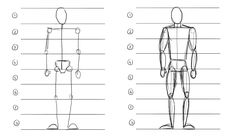 proportions of the human body - Google Search