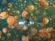 Jellyfish Lake (Palau)