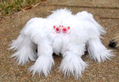 furry arachnid beaut