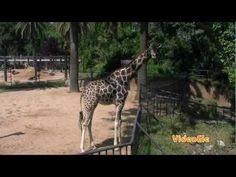 En el zoo. Nivel A1 VIDEOELE