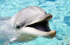 I got Dolphin! Which Marine Mammal Are You? You got: Dolphin You are a dolphin! You are a calm, lovable person who can become friends with anyone. You are adventurous and have a sense of humor. You are always the helping hand to those in need.