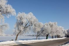 Hoar frost // by Gordon Plunkett, Portage La Prairie, MB Weather Network, Let It Snow, Frost, Photo And Video, Sweet, Outdoor, Candy, Outdoors, Outdoor Games