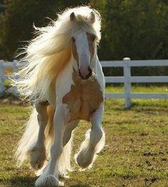 #gorgeous #zoology #animals #horse #horses