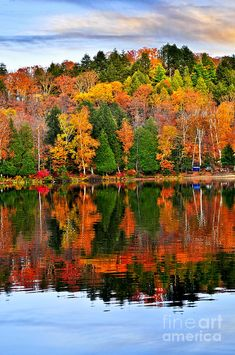 ✮ Forest of colorful autumn trees reflecting in calm lake. Algonquin Park, Canada
