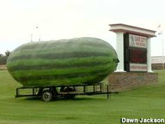 Giant watermelon in Arkansas