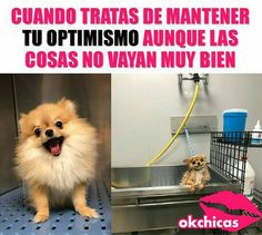 ok chicas ( Memes Estúpidos, Stupid Memes, Cat Memes, Mexican Funny Memes, Funny Spanish Memes, Wtf Funny, Hilarious, Funny Images, Funny Pictures