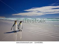 Track penguins & whales as you explore the White Continent by booking your very own tailor-made Antarctica cruise with Nuevo Mundo. Beach Landscape, Landscape Art, Travel With Friends Quotes, Travel Quotes, Attraction World, Antarctica Cruise, King Penguin, Adventure Tours, Adventure Travel