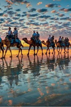 To know more about Cable Beach, Western Australia 'Camels at Sunset', visit Sumally, a social network that gathers together all the wanted things in the world! Featuring over 1 other Cable Beach, Western Australia items too! Beautiful Sunset, Beautiful World, Beautiful Places, Animals Beautiful, Simply Beautiful, Australia Travel, Western Australia, Broome Australia, Places To Travel