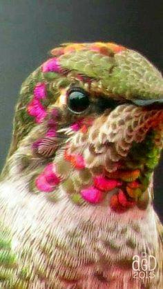 Colorful Birds - Hummingbird Close-up All Birds, Little Birds, Love Birds, Pretty Birds, Beautiful Birds, Animals Beautiful, Exotic Birds, Colorful Birds, Bird Pictures