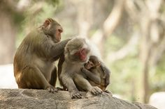 Happy family time on the #MonkeyIsland in #Sanya, #China…