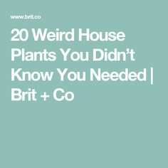 20 Weird House Plants You Didn't Know You Needed | Brit + Co