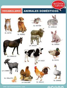 Animales domésticos. http://quijotesancho.com/vocabulario-2/ Descarga: http://www.quijotesancho.com/vocabulario/animales_domesticos.pdf