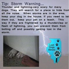 Keep your dogs safe during a storm! #Thunder #Dogs #Pets #Illinois #PetSafety