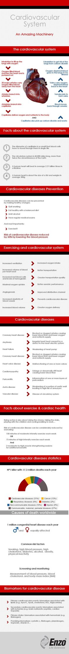 Cardiovascular System An Amazing Machinery - Enzo Life Sciences