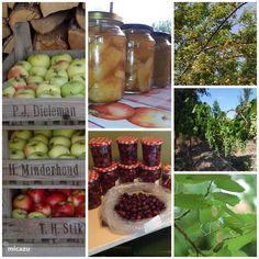 Az Almafa (de appelboom) in Nagykónyi, Tolna-Mecsek huren? Hungary, Fruit, Holiday, Vacations, The Fruit, Holidays, Vacation, Annual Leave