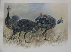 Image result for line drawing guinea hen