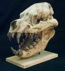 Dinocrocuta gigantea. A extinct monstrous hyena.