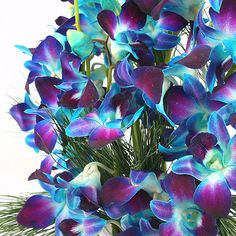 Blue Dendrobium Orchids would make a good tattoo