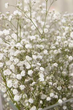 Plant some baby's breath seeds in your organic flower garden on the west coast. Learn about growing Baby's Breath Gypsophila Seeds in our How to Grow instructions. Outdoor Plants, Garden Plants, Growing Flowers, Planting Flowers, Gypsophila Elegans, White Flowers, Beautiful Flowers, Fresh Flowers, Babys Breath Flowers