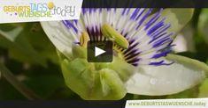 Geburtstagsvideo mit einer zauberhaften Blume und einem wundervollen Geburtstagslied. Alles Liebe und Gute zum Geburtstag!