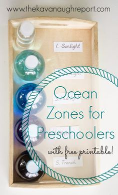 Zones of the Ocean for Preschoolers with Printable -- perfect for a Montessori inspired unit study on the ocean